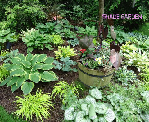 Asian Garden Design Plans